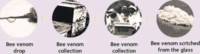 Bee venom collection process