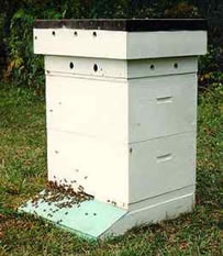 Bee venom extraction hive
